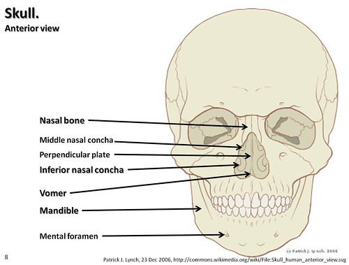 Skull diagram, anterior view with labels part 3 - Axial Skeleton ...
