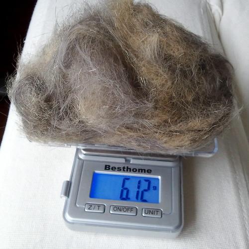 european shorthair kitty fur for handspinning