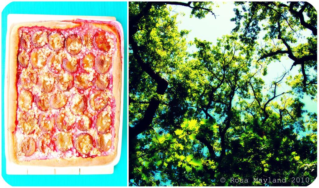 Prune Focaccia Picnik collage 1 bis