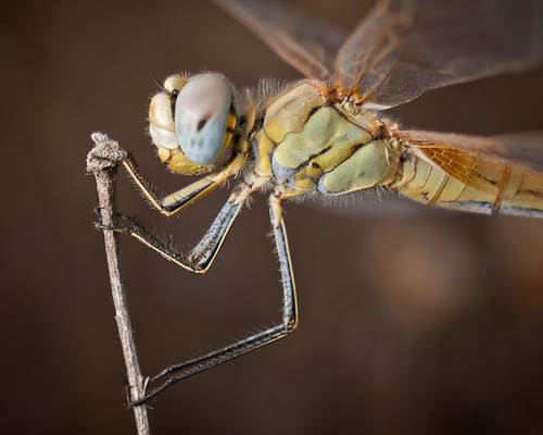 Close to a dragonfly