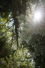 Pacific Rim Forest