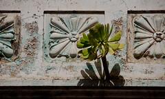 Verode en La Laguna (Luisgbb) Tags: balcony tenerife balcón lalaguna verode