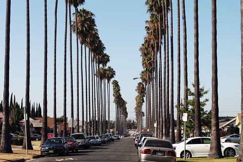 Los Angeles 5