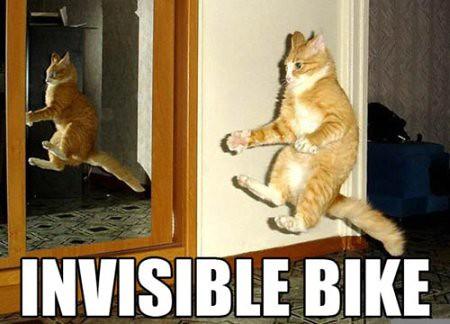 popular wealth cat picture