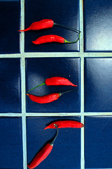 quente. (Rodrigo Valena) Tags: blue red summer wallpaper brazil verde green sex azul brasil de rojo bresil vermelho sexo cruz verano vero peppers material recife wallpapers papel rodrigo azulejo fondo papeis pernambuco parede pantalla nordeste fondos papeldeparede rvc pimentas valena fondodepantalla pimientas fondosdepantalla papeisdeparede rodrigocruz rvc77 rodrigovalena