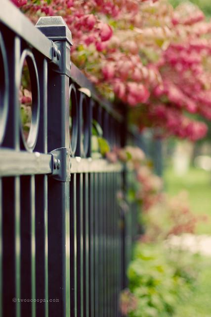 fence friday burn 260/365