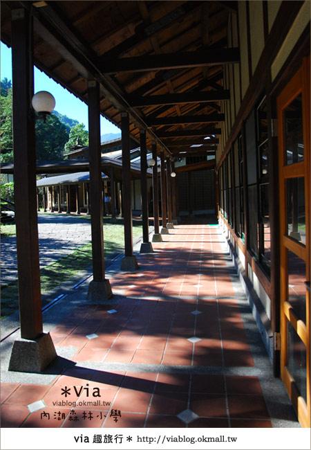 【溪頭一日遊】森林中的夢幻校園~內湖森林小學20