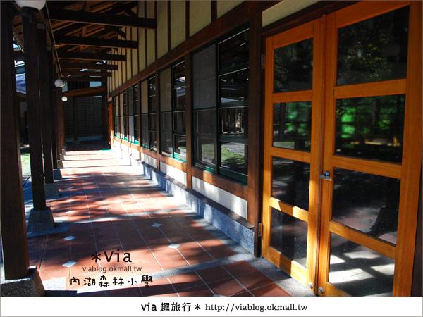 【溪頭一日遊】森林中的夢幻校園~內湖森林小學19