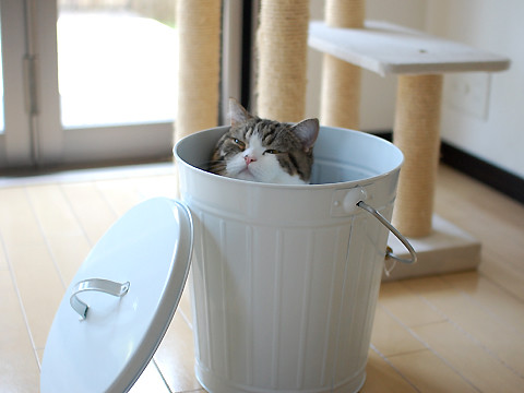 cute maru the cat napping in a bucket