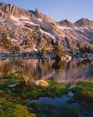 Young Pine, Upper Young Lake, Yosemite National Park (Tyler Westcott) Tags: sunset mountain reflection pine july explore shore granite wildflowers yosemitenationalpark alpinelake highsierra 2010 yosemiteblog younglakes raggedpeak tachihara4x5 upperyounglake