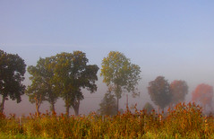 a misty morning (Per Ola Wiberg ~ Powi) Tags: morning mist beautiful october sweden explore showroom 2007 musictomyeyes zafiro goldheart thegalaxy eker flickrstars theworldinmyeyes golddragon beautifulbeautifulbeautiful naturesgallery abigfave thethreeangels natureandallitsbeauty flickrdiamond flickrbronzeaward bestchoice flickrsilveraward eperke betterthangood flickridol goldstaraward magicaltouch peaceawards thebestshot beautifulshot sharingart photographersgonewild naturestreasures onceinyourlife angelawards ilikethenature addictedtonature lizasenchantingphotogarden naturesprime angelgallery however~itsstillmylife shootingstarsawards fotografiaynaturaleza mygearandme mygearandmepremium buildyourrainbowtransparent thewonderfulnatureworld thenaturalworld betterthangoodlevel2 earthofnature chariotsofartists hellofriend peaceandheart photographersworld