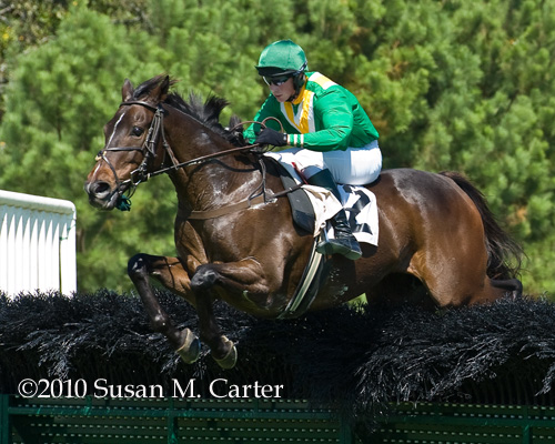 Dubai Sunday steeplechase race horse