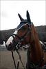 Gucci Queen (Lù *) Tags: show portrait horse animals jump jumping nikon gucci salto cavallo horseriding d60 ostacoli nikond60italia ahowjumping