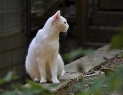 Honeysuckle on the Wall (BKHagar *Kim*) Tags: pet cats animal cat fur kitty kitties furbabies bkhagar
