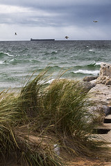 Ship Passing (ETCphoto) Tags: grass birds waves wind michigan lakemichigan whitehall freighter 0272