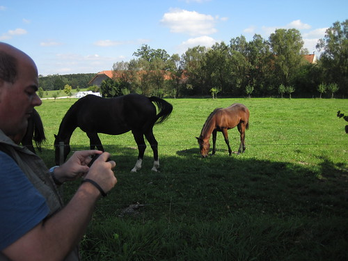 IMG_0932 Horses