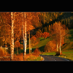 Country road (regina_austria) Tags: road autumn trees fall niceshot searchthebest harmony breathtaking musictomyeyes hiddentreasures 100faves beautifulshot 25faves anythingyoulike flickraward othervillage diamondstars flickrsun colourartawards wonderfulworldmix excapture dazzlingshots goldstaraward peaceawards highqualityimages flickrgoal vanagram vangram grouptripod angelawards realgem naturesprime mygearandmepremium mygearandmebronze mygearandmesilver mygearandmegold 0bkektif