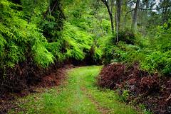 Caminito Verde (Girama) Tags: nature hojas gotasagua reservaebanoverde