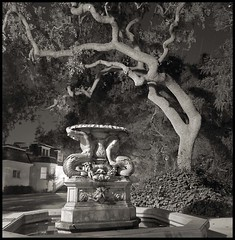 midnight in the garden (stormiticus) Tags: longexposure blackandwhite bw tree film night quercus carriagehouse 4x5 hp5 oaks largeformat menlopark 75mm canham 30mins caltar
