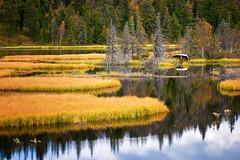 Høsttjern (#1) (Krogen) Tags: nature norway landscape norge natur norwegen september noruega scandinavia krogen landskap noorwegen noreg skandinavia oppland hugulia nordreland olympuse3