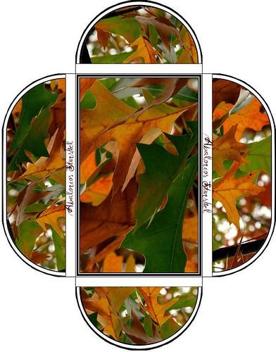 Caja collar otoño