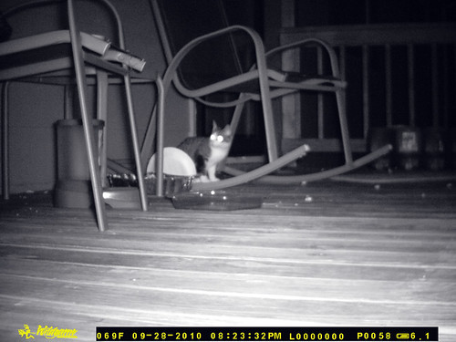 Sitting under the rocking chair with body in profile to the camera, Dreadnought looks toward the end of the porch, over the camera's left shoulder as it were.  Timestamp 09-28-10 08:23:32PM