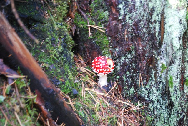 sweden fairy tale mushroom by a days outing