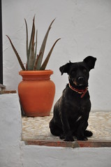 Dog, pot. Frigiliana