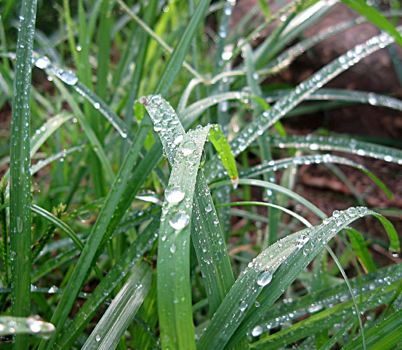 30-09-2010-waterdrops-close-up