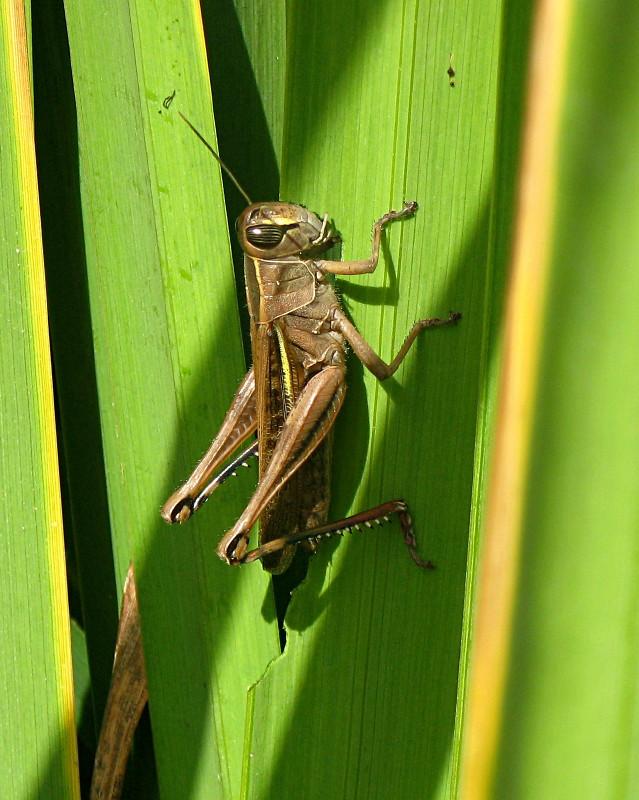 30-09-2010-grasshopper14