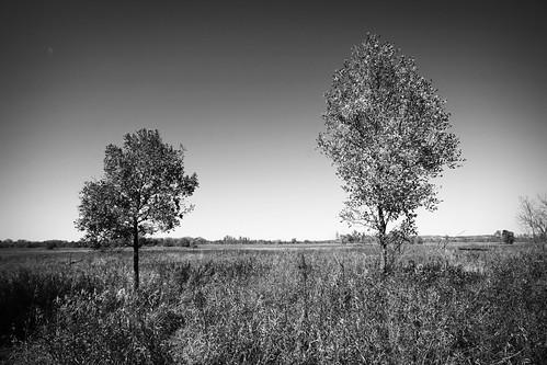 trees-bw