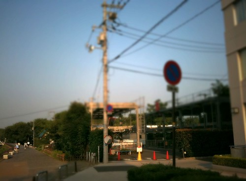 ある夏の朝