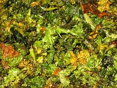 Kale Chips 1.5