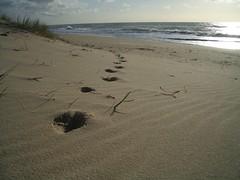 CIMG0789 (T Mann) Tags: beach footprints