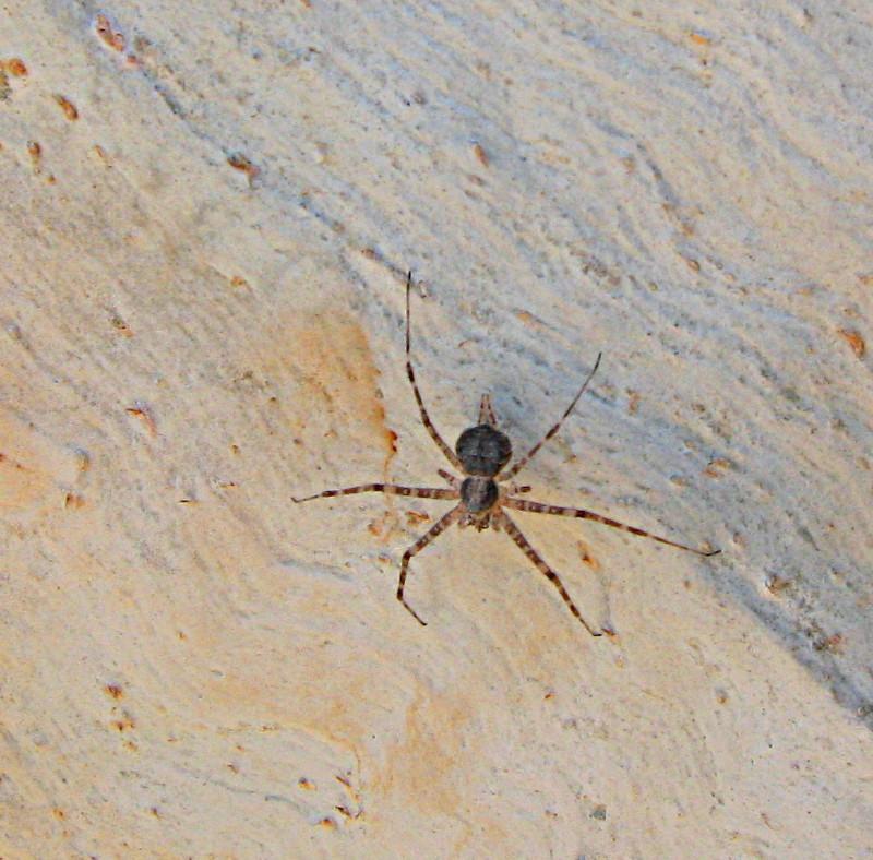 02-10-2010-spider2