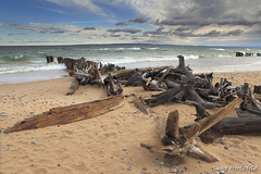 Whitefish Point  - Driftwood (Luke Hertzfeld) Tags: lake tree beach water clouds sand michigan stormy lakesuperior whitefishpoint upperpennisula