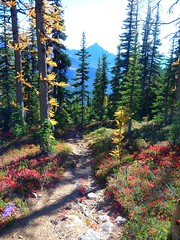 PCT spur trail to Snowy Lake