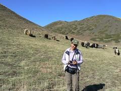 Boloroo and Yaks (jayselley) Tags: park three nationalpark asia desert september mongolia national beauties gobi exodus 2010 mongol gurvan yolynam vulturesmouth gurvansaikhan threebeauties saikhan mongolianadventure