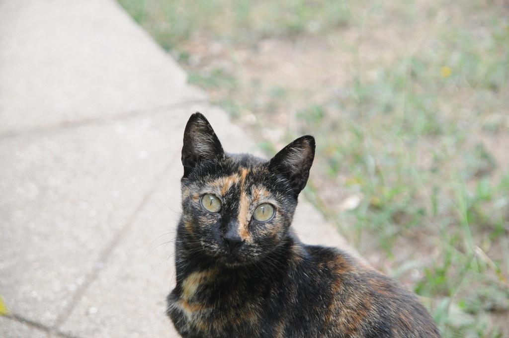 castanha, a gatinha do campo