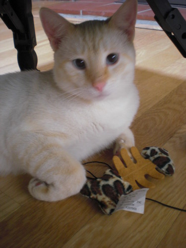 Mikey with Fish Toy