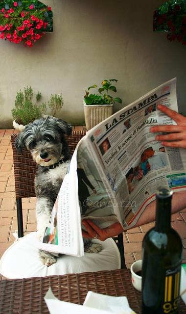 Cane leggendo il giornale