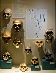 Harvard Museum of Natural History: Skulls & th...