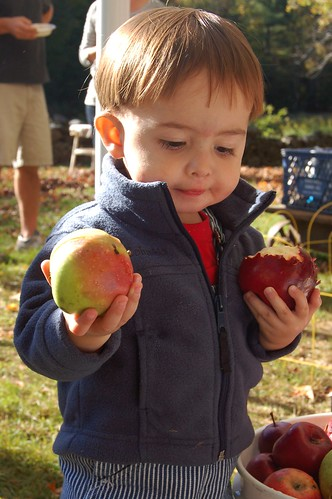 Will selecting apples to eat by Eve Fox, Garden of Eating blog, copyright 2010