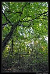 Forêt (cquintin) Tags: forest forêt