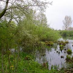 wiel   Dalem  NL (rondendikken) Tags: nature water groen natuur dijk plas vijver wilgen