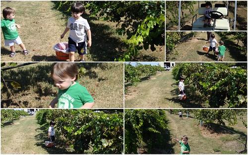 Shug and Shugie at Wenker's Vineyard, Albertville AL
