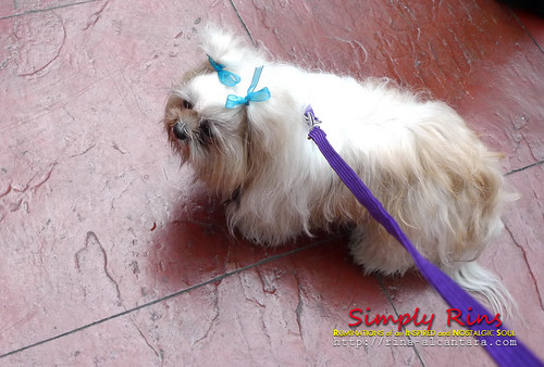 Pet Blessing at Eastwood City 04