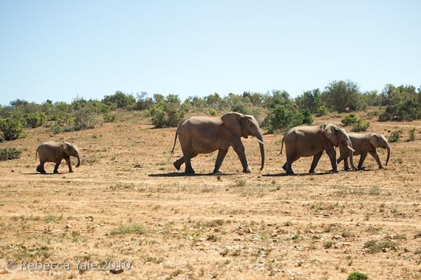 RYALE_SA_National_Park_Addo_63