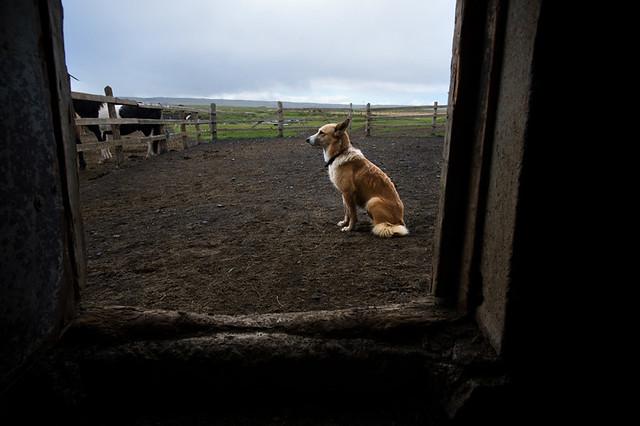 Herd_In_Iceland-20485