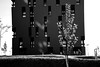 guess (montnoirat) Tags: vienna wien leica blackandwhite film monochrome 35mm ed blackwhite nikon delta super xp2 f 400 m8 plus sw hp5 p 100 pan kodachrome mm d200 monochrom nikkor agfa 35 schwarzweiss weiss ilford fp4 m6 apx schwarz vr afs x1 leicacamera dx georg m9 m7 x2 f3556g guessedvienna i 18105mm schwarzenberger leicam9 pureblackandwhite georgschwarzenberger leicakamera ゲオルクシュワルツェンバーガー leicam9monochrom leicam9monochrome